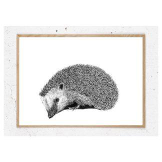 Plakat med pindsvin i sort hvid