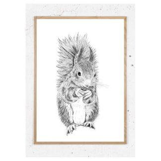 Plakat med egern i sort hvid
