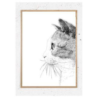 Plakat med kat