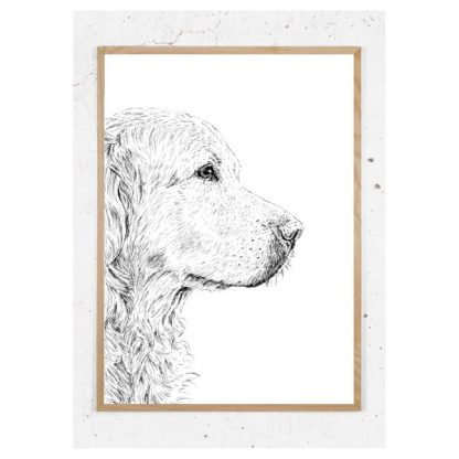Plakat med retriever